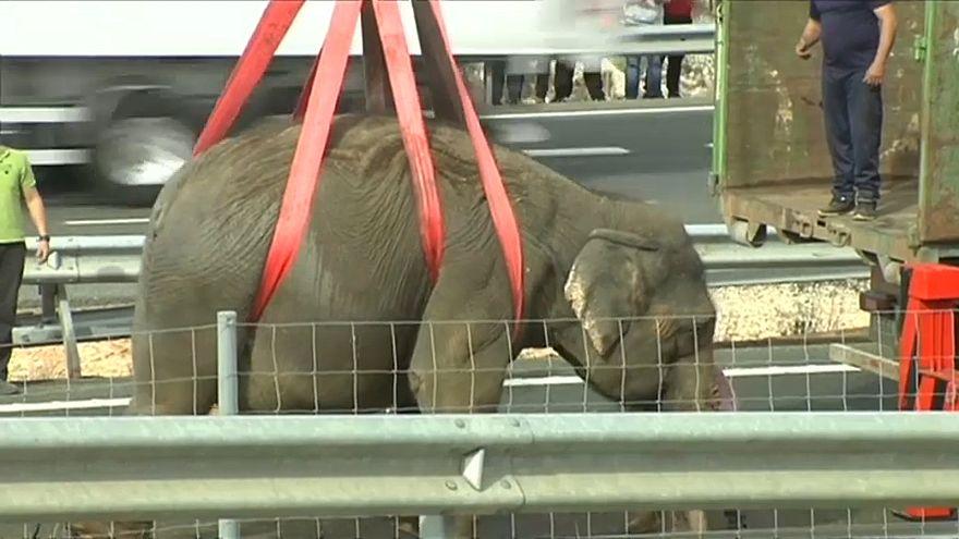 Elefante morre em acidente de camião em Espanha