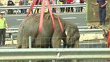 Auf der Überholspur: Elefanten verunglückt