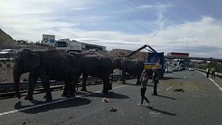 circus truck that was transporting elephants crashed