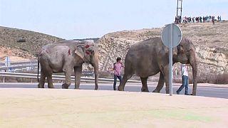 Blutende Elefanten auf der Autobahn: Tierschützer schlagen Alarm