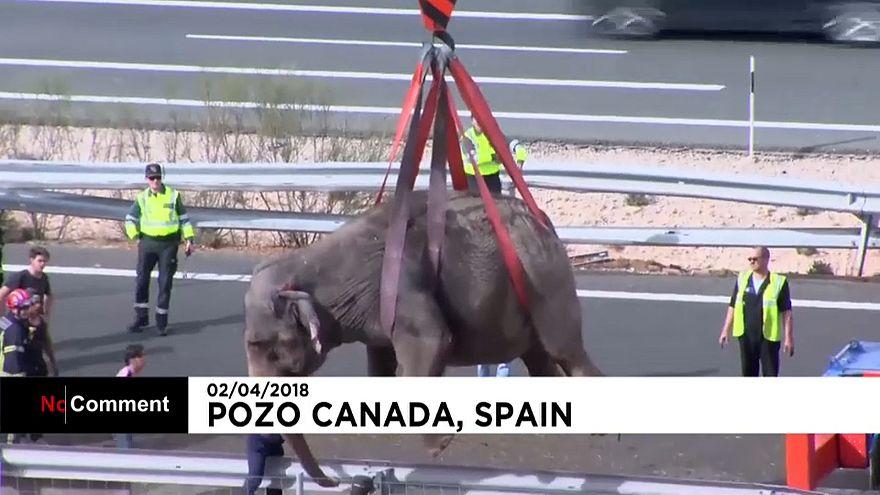 Espagne : un éléphant tué dans l'accident d'un camion de cirque