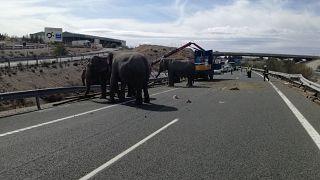 Tροχαίο με ελέφαντες στην Ισπανία