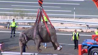 Слоны пострадали в ДТП