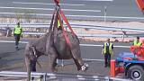 One elephant was killed and two were injured in a truck rollover in Spain.