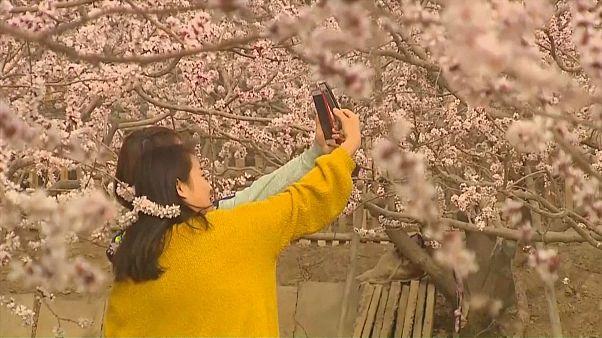 Çin'de bahar şenliği başladı