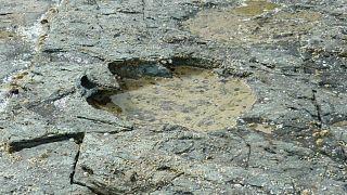 اكتشاف آثار أقدام عملاقة لديناصورات في اسكتلندا