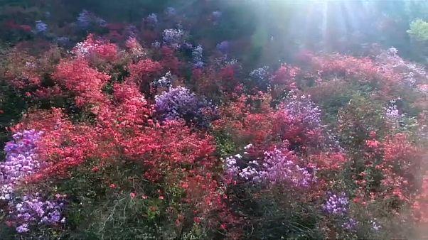 A primavera em flor na China