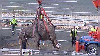 Elpusztult egy elefánt egy spanyol kamionbalesetben