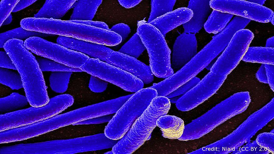 بكتيريا مقاومة للمضادات الحيوية تؤرق الأمريكيين