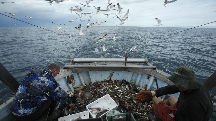 UK, Ireland top EU countries ignoring scientific advice on Atlantic fishing