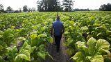 U.S. farm belt will be hit by latest Chinese import tariffs