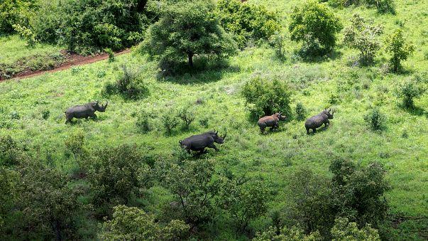 بالفيديو: صدع يشق الأرض في كينيا .. هل تقسم القارة السمراء إلى شطرين؟