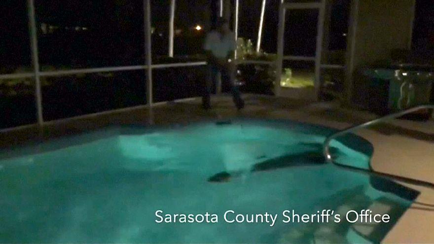 Florida'da dev timsahın havuz keyfi