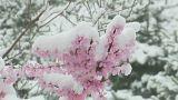 Зимнее царство весной