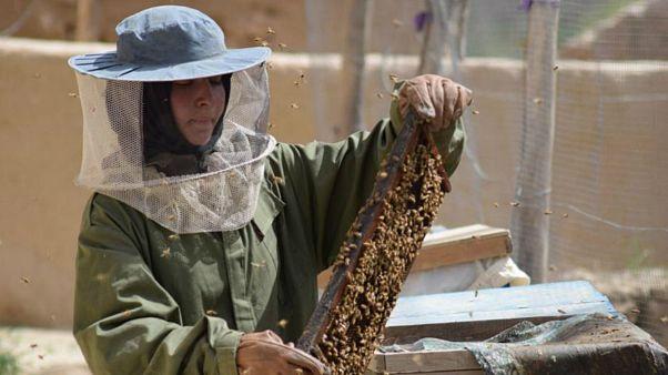 دختر افغان با زنبورداری کارآفرین شد