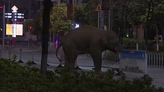Kína: elefánt kóborolt az utcákon