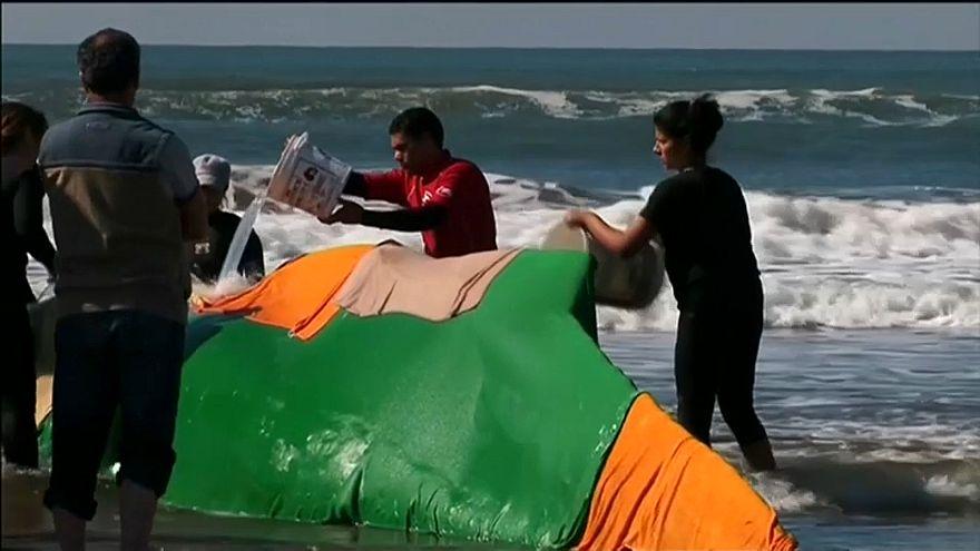 Борьба за жизнь горбатого кита не увенчалась успехом