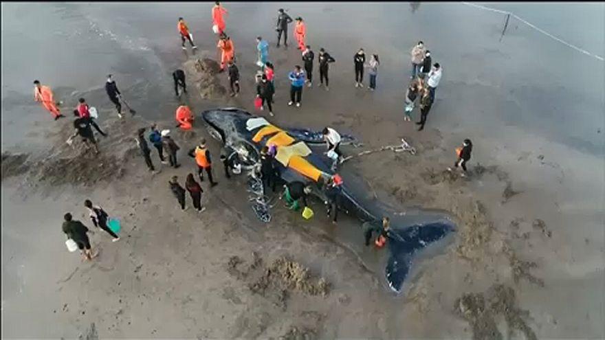 Elpusztult a partra sodródó bálna