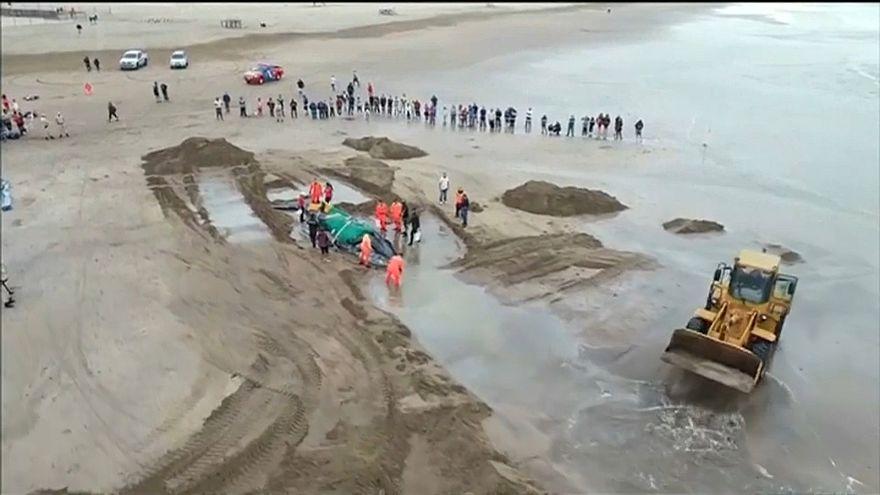 Une baleine échouée décède malgré des dizaines d'heures d'efforts pour la sauver