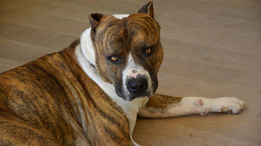 كلب يقتل طفلا رضيعا في ألمانيا