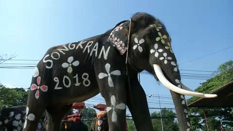 Elefánt fesztivál