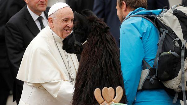 Uma peregrinação de lamas para ver o Papa