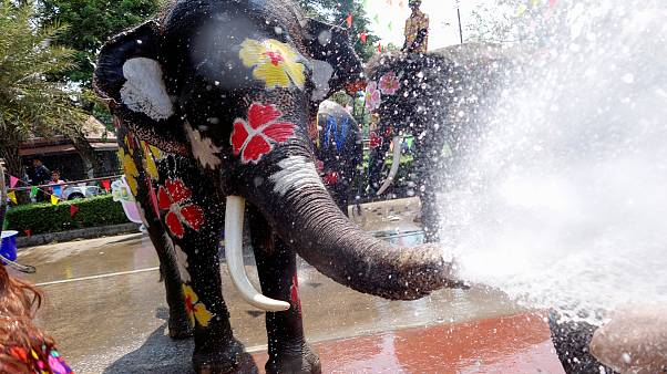 برگزاری جشن آب تایلند با فیلهای آب پاش