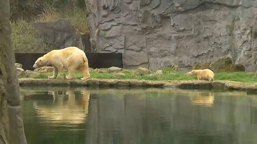Bebé urso vê pela primeira vez a luz do dia