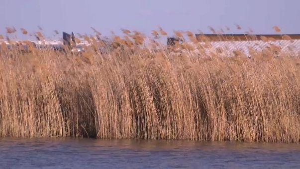 Hallan el cuerpo de una mujer en el lago Neusiedl, en Austria