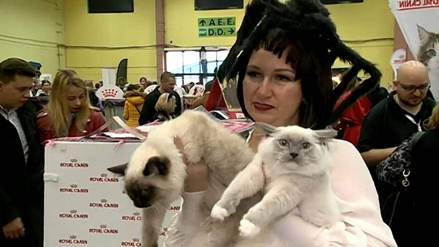 Международная выставка кошек в Бухаресте