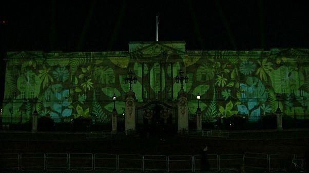 Rainforest lights up Buckingham Palace