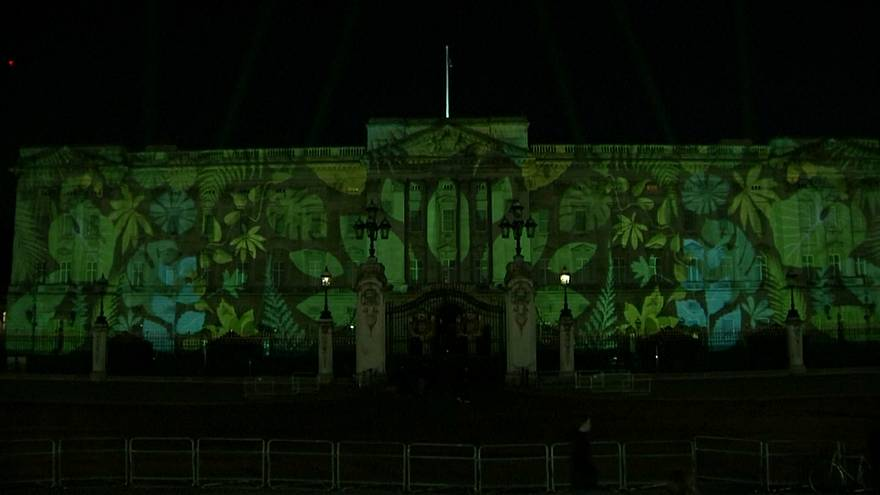 Rainforest lights up Buckingham Palace