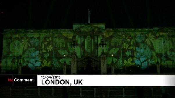 Őserdőbe borult a Buckingham-palota