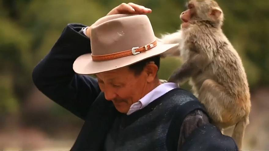 """The Monkeys' Father"" in Tibet"