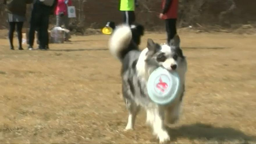 Frisbee-catching dogs take part in China contest