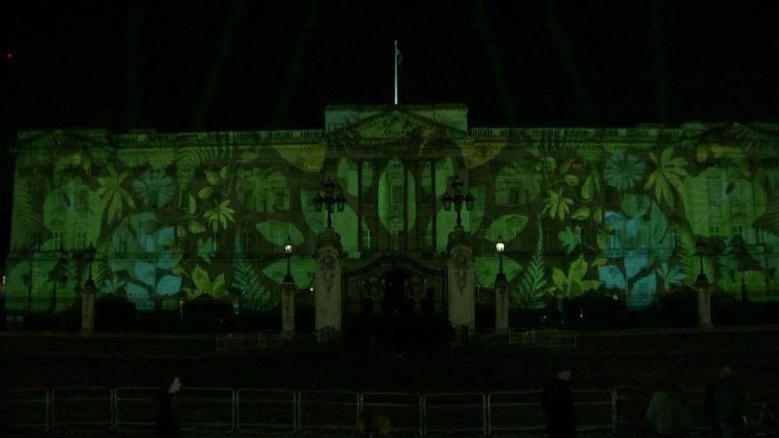 Buckingham Sarayı yemyeşil oldu