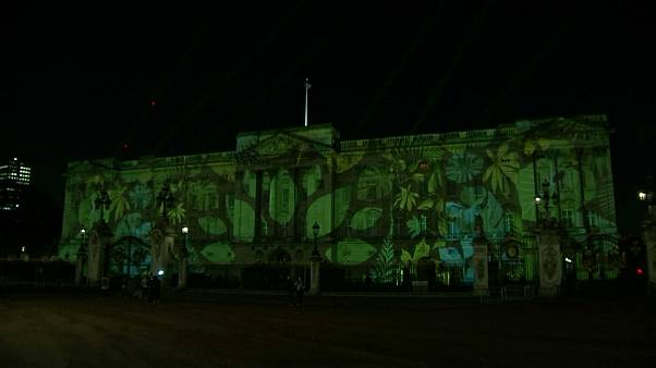 Rainforest projected on Buckingham Palace