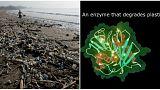 Bilim insanları plastiği yiyen yeni bir enzim türü buldu