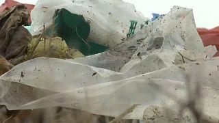 """Биологи случайно придали сил """"поедателю пластика"""""""
