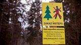 Ευρωπαϊκό Δικαστήριο: Καταδίκη Πολωνίας για το δάσος Μπιαλοβιέσκα
