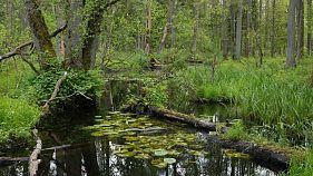 Białowieża National Park, Poland