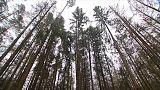 UE: stop agli abbattimenti nella foresta millenaria polacca
