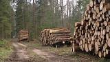 EU experts say large-scale logging destroys animal habitats