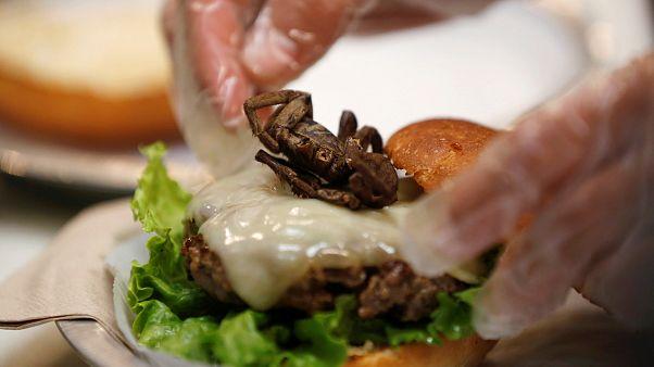 ¿Barritas con polvo de grillo o gusanos búfalo con chili picantes?