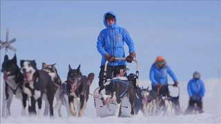 Путешествие по арктической тундре