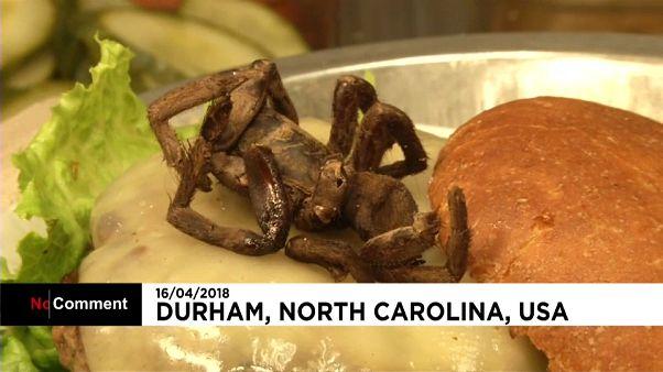 Örümcek yiyerek korkusunu yendi