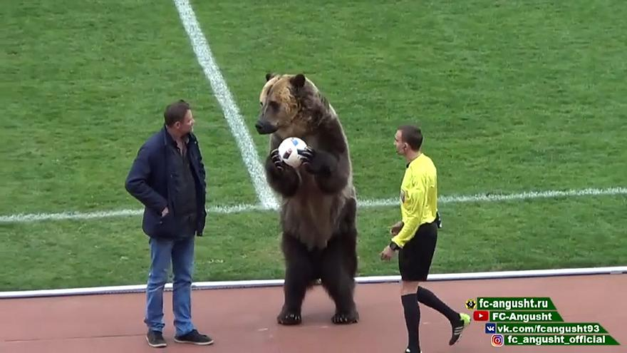 Медведь на футбольном поле