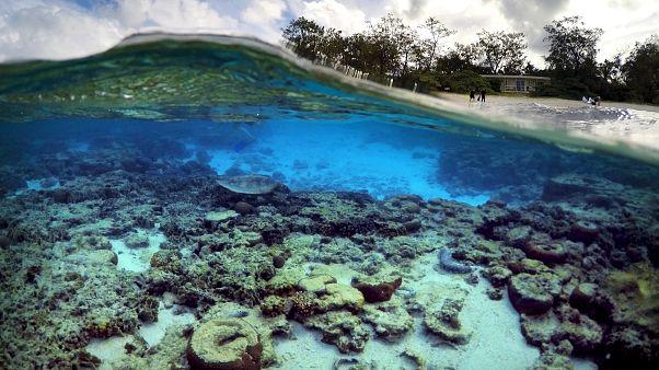 """Grande Barrière de corail : une hécatombe """"catastrophique"""""""