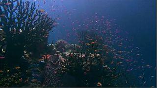 """""""Stress da calore"""" per la Barriera Corallina"""