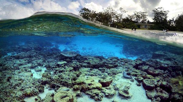 Megfőnek a Nagy-korallzátony koralljai